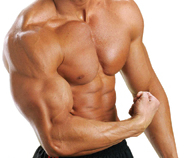 Alteration in Steroid Receptor Genes create Fat Burning Muscle