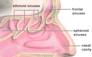 Anabolic Steroids Blog – iSteroids.com » STEROIDS FOR INFLAMMED SINUS CAVITIES