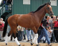 Trainer who won 2008 Kentucky Derby agrees to suspension
