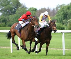 A thoroughbred's injury sheds light on use of medications in horses
