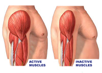 Hormone stimulating appetite found useful for muscle atrophy