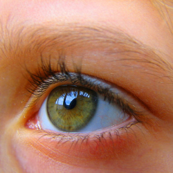 Autoimmune diseases of the body can be treated with eye protein