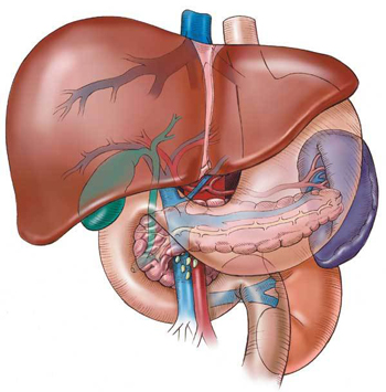 Liver protection from obesity-linked liver disease