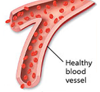 Protein may guard new blood vessels from leakage